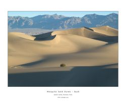 Mesquite Sand Dunes, Bush by welder