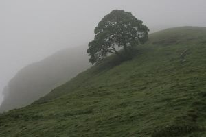 Tree in Mist by Sheiabah-Stock