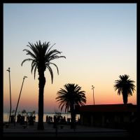 Palm Silhouettes by Pianochick66