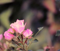 Pretty in Pink by RiaPi