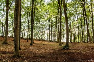 Into the Woods by Linsenmodus