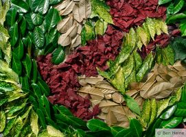 Abstract Compo - Leaves by BenHeine