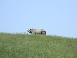 Lonely Rhino by JameesPhotos