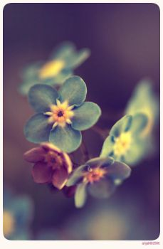 Forget me not - 6 by anjali