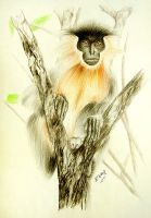 An Assamese Capped Langur by S-A--K-I