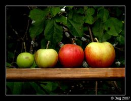 Apples 01 by dugonline