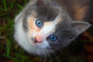 Rosemary as a Kitten by jmhamilton