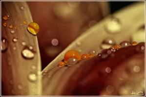Drop the Droplet by algerienBBA