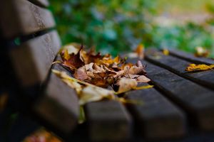 autumn bench by little--baby-nothing