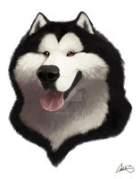 Alaskan Malamute Caricature by CharReed