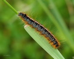 Multi colored Caterpillar by natureguy