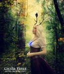 Seeker by ceciliay