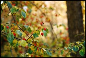 Autumn lights - 2 by oldraven