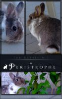 Tab Rabbit n.1 by Peristrophe
