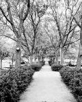 4x5 Film 2 by AkimaDoll