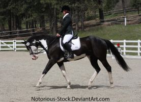 Dressage 011 by Notorious-Stock