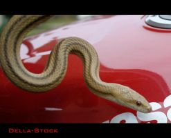 Yellow Rat Snake.5 by Della-Stock
