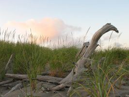 Driftwood by Sonic840
