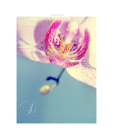 ::ORCHID:: by onixa