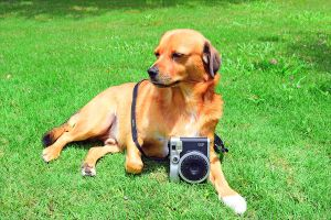 GUESS WHO GOT A BRAND NEW CAMERA?? by dear-instax