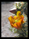 Wickenburg Floral 8 by Sabress