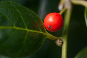Lonely Berry by tylerscottsmith