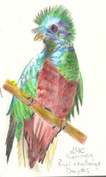 Not-a-doodle#5 Quetzal by Supermacaquecool