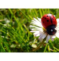 Coccinelle by mzelBulle