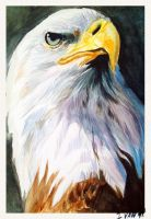 Eagle Speed Paint - acuarela by TERRIBLEart