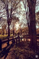 Central Park in red by sylvaincollet