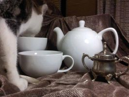 Still Life with Tea and Cat by MountainInspirations