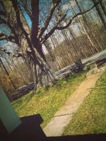 Path that lead somewhere you let them. by CindyLouWhoXox