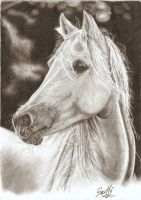 horse in pencil by SusHi182