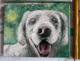 Oil - My colleague's dog by keiross