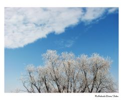 The Last Grip of Winter by NifeenAnkh