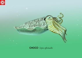 Cuttlefish by omnicogni