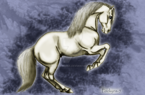 The grey stallion by pookyhorse