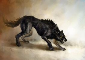 Black wolf by KimDingwall