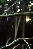 spiderweb by stupidduck