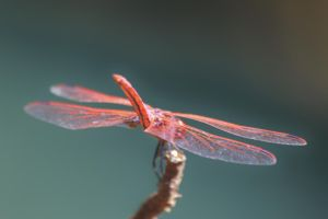 Dassia dragonfly August 2014 4 7 by melrissbrook