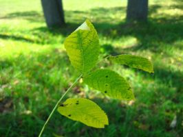 stick of leaves 6 by ElleStock