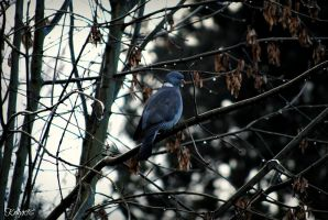 Pigeon In a Tree by Kellyx96