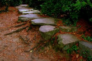 Path to the roots by uranie