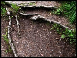 Roots On The Ground by Linduzki