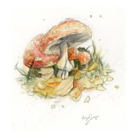 Toadstools by Yaviewild