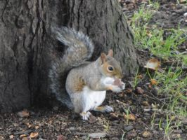 Squirrel by Leonard-Umbra