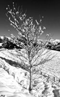 Tree in winter by Aroha-Photography