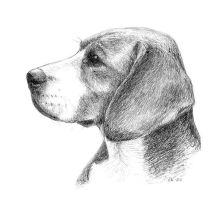 beagle portrait by asbolos