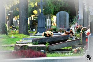 Autumn @ Vienna Central Cemetery #06 by sleepingFrog
