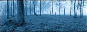 Panoramic trees in midnight blue mist, Noblex by harrietsfriend